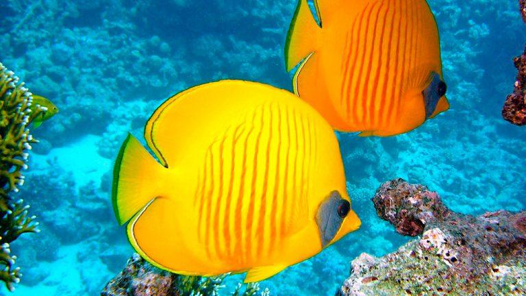 Share Cancun - Servicios - Coconut Divers | Peces